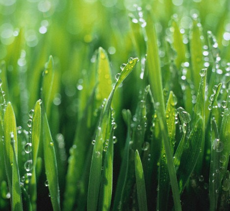 Let us make your lawn greener with our fertilization and spring clean up